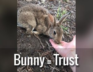 How a bunny got me thinking about trust in the workplace